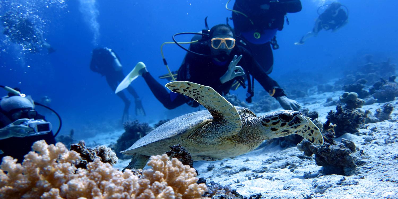 Best Dive Centres In Hurghada Padi