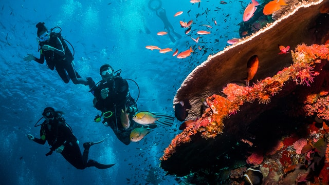 Best Dive Centres In Hurghada